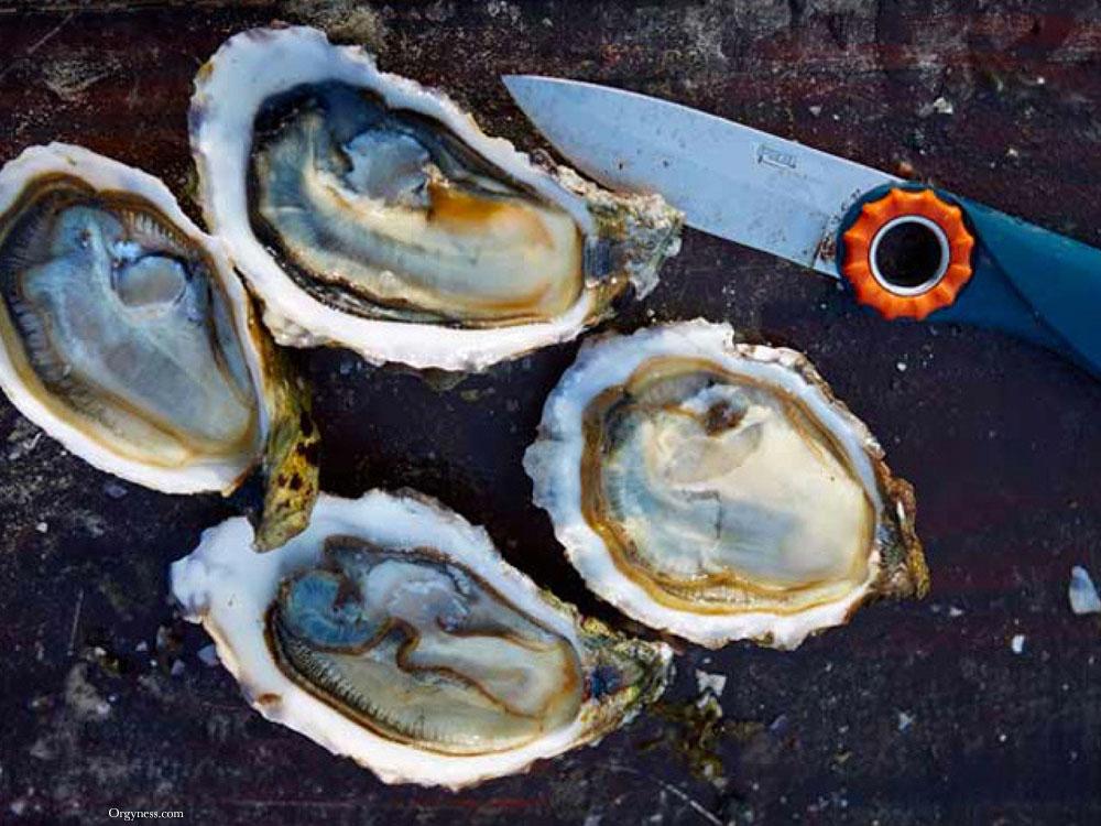 panier-de-noel-huitres-ostra-regal